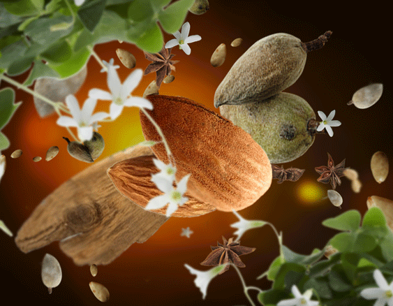 Subtle Almond
