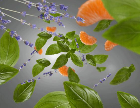 Anti-odour For Kitchen - Fresh & Floral