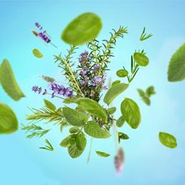 Aroma Focus Aromatic Leaves
