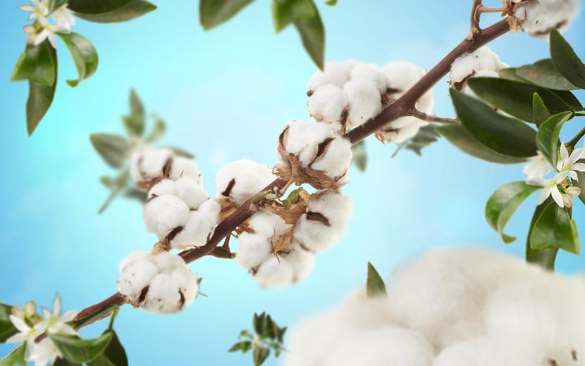cotton caress