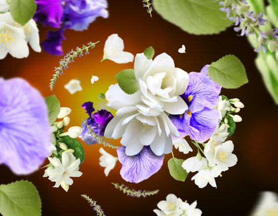 musc Flowers